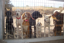 Animal Shelter in Danger at the Island of Santorin