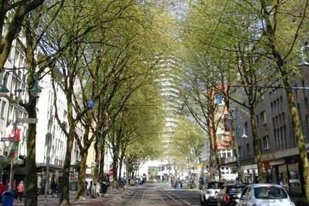 Bild zur Petition mit dem Thema: EIL-Petition zum Erhalt unserer Allee der Leineweberstraße in Mülheims Innenstadt