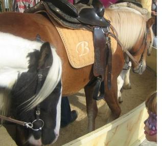 Für Volksfeste in Darmstadt ohne Ponyleid! Ban The Use of Live Ponies for Carousel Rides!!!