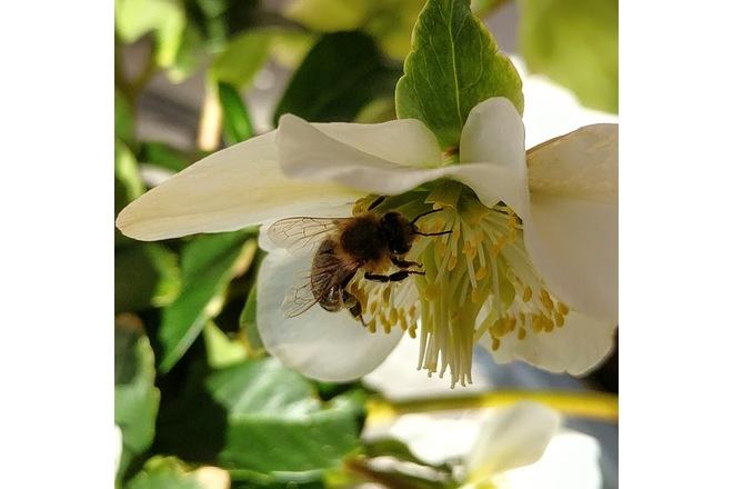 Rettet Die Bienen: Rettet Die Bienen In Sachsen