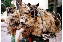 Stop the Yulin Dog Meat Festival